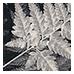 Botanic Grey (0849765)